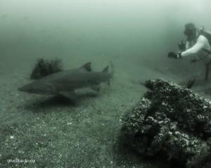 sharks-8