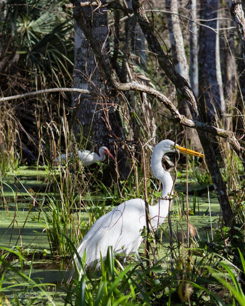 Silver River birds