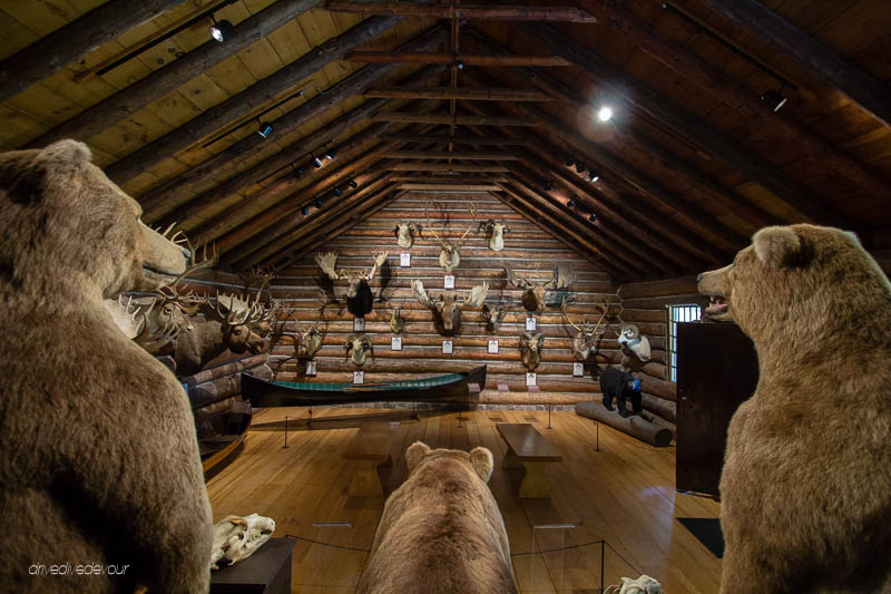 Shelburne Museum taxidermy