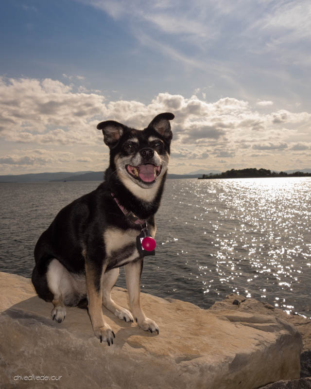 Lucy on Lake Champlain