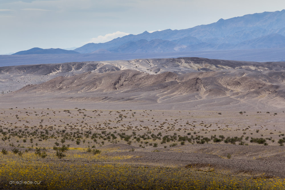 DeathValleySuperblooms-29
