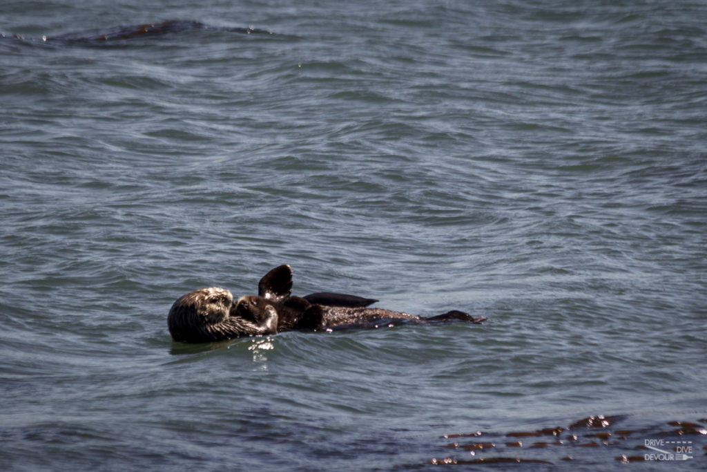 A mother and baby sea otter